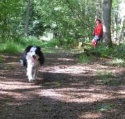 Ayla in het bos, juli'08